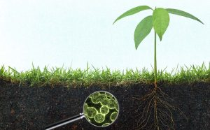 هیومیک اسید بر ریشه گیاه بیشترین تاثیر را میگذارد