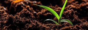 زندگی گیاه به مواد آلی و معدنی موجود در خاک وابسته است