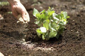 کابرد کود ارگانیک برای گیاه