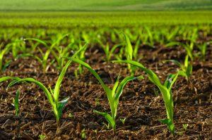 مزایای استفاده از هیومیک اسید در زمین های کشاورزی