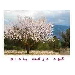 کود درخت بادام
