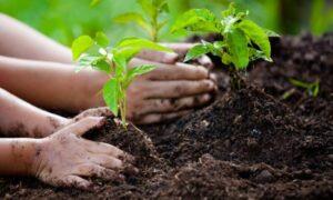 گیاهان در حال کاشت - محلول پاشی اسید هیومیک