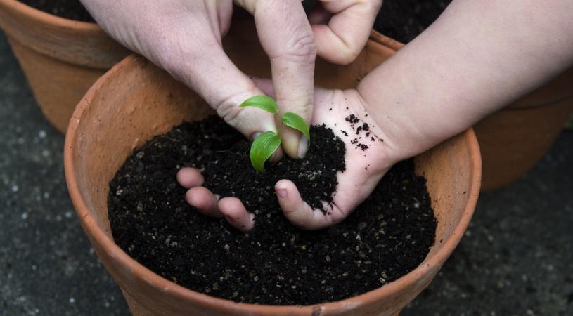 کاشت گیاه در گلدان - مزایای اسید هیومیک