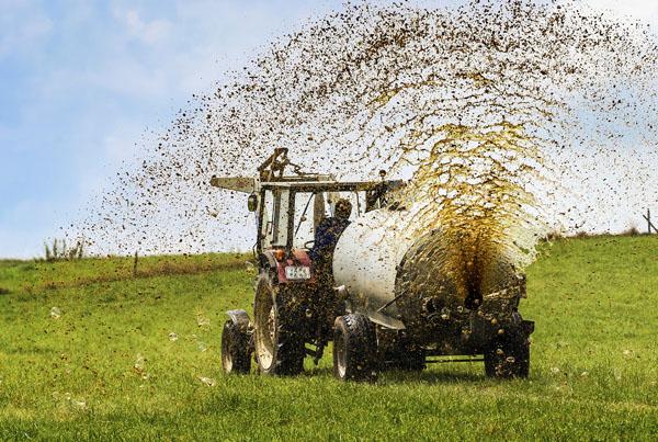 کود سیاه برای یونجه - Black manure for hay