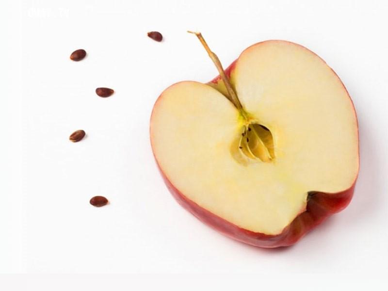 طریقه کاشت دانه سیب
