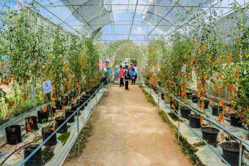 کشت سبزیجات و گیاهان دارویی در گلخانه