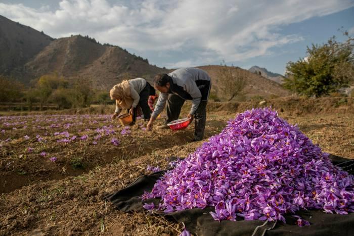 موانع سد راه کشاورزی ایران