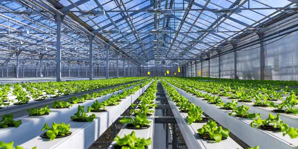 شیوه کاشت انواع محصولات گلخانه ای